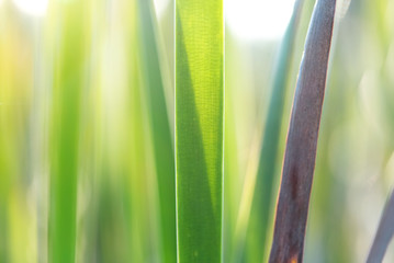 Green leaves nature with copy space using as background or wallpaper.