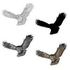 Vector illustration. An image of a flying owl. Black and white line, silhouette, black and white, gray and color image.