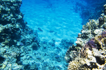 Landscape of the seabed with coral