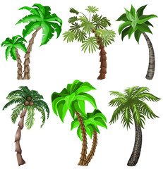 Set of Tropical plants
