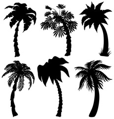 Set of Tropical palm silhouettes