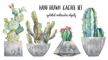 Watercolor cactus illustration. Hand drawn desert plants on white background. Flowering cacti with pots