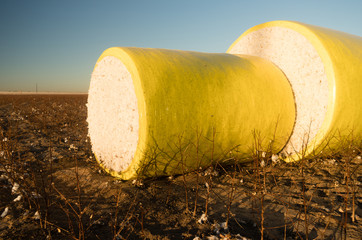 Fresh Bail Harvest Cotton Farm Field Texas Agriculture