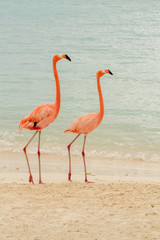 A pair of flamingos on a tropical beach