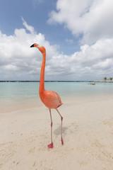 Garden Poster Flamingo A flamingo on a tropical beach