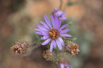 RMNP-Macroflowers1