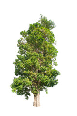 Green tree on white isolated