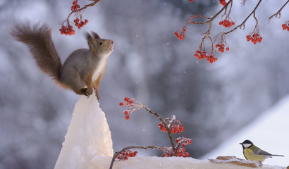 squirrel standing on ice with titmouse beneath
