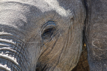 Close-up of an elephant's face