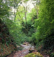 Осенний лес в горах Кавказа.