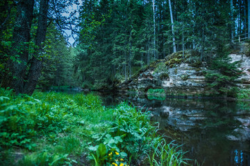 A beautiful viev to the river in forest