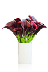 flowers of dark red calla lily isolated with clipping path.