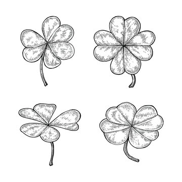 Clover leaf hand drawing vintage style isolate on white background,Happy and lucky day symbol