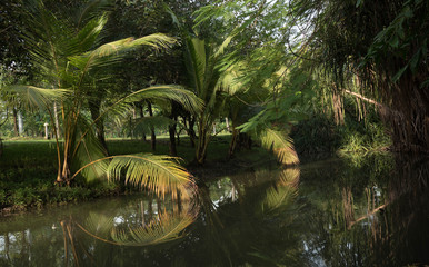 Coconut trees and reflections in the park
