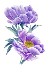lilac peonies watercolor