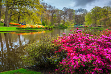 Blooming tulips and colorful flowers in fabulous Keukenhof park, Netherlands Wall mural
