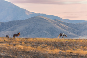 Herd of Wild Horses int he Utah Desert