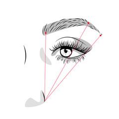 Eyebrow proportion