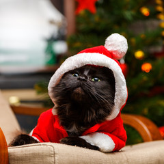 Picture of festive cat in santa costume looking up