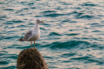 The seagull sitting on the concrete boulder in the sea closeup