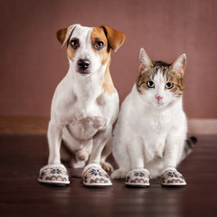 Cat and a dog in slippers