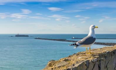 Goéland au bord de la mer