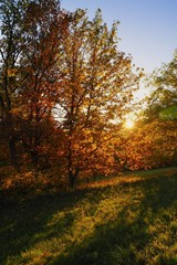 Colorful autumn in nature, gold leaves, nature colors
