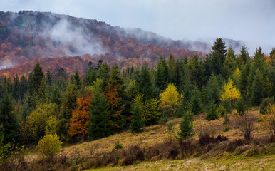 deep autumn in countryside on gloomy day. beautiful nature scenery with forested mountain in fog on a cloudy day