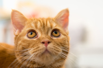 Selective focus of cute red cat eyes.