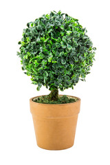 plastic Pot plant bush tree Isolated on White Background with clipping path