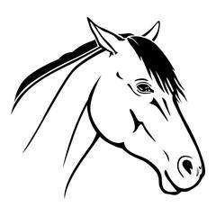 Horse muzzle portrait