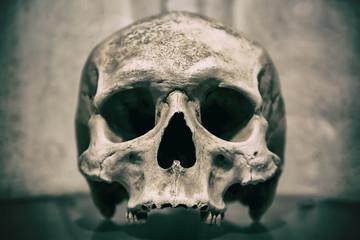 Old human skull close up. Toned image