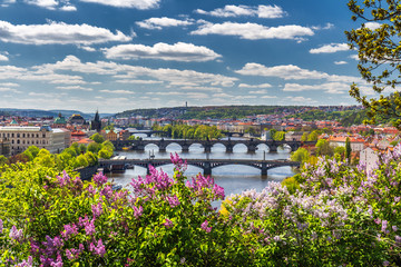 Wall Murals Prague The blooming bush of lilac against Vltava river and Charles bridge, Prague