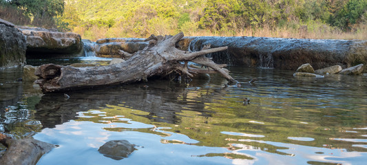 Low Angle Shot Of Trunk On Water With Forest Around it