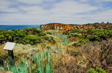 The great ocean road. National Park Campbell.