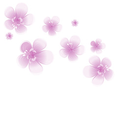 Purple Violet flowers isolated on White background. Apple-tree flowers. Cherry blossom. Vector