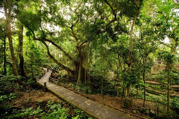 Path in money forest in Ubud on Bali, Indonesia