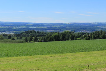 Beautiful landscape with green corn fields, trees and blue sky in Gornhofen, Baden-Wuerttemberg, Germany.
