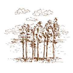 Hand drawn pine trees, landscape with pine forest. Sketch on a white background. Vector illustration.