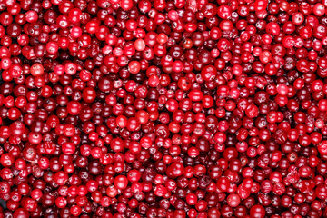 ripe cranberries are scattered