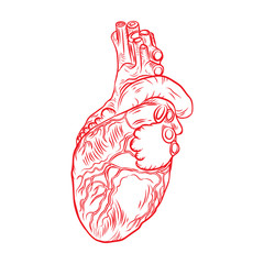Red human heart with aorta, veins and arteries isolated on white background. For cardiology or medical design. Hand drawn flesh tattoo concept. Vector.