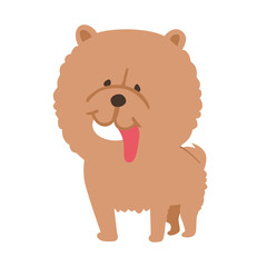 dog,chow chow,illustration
