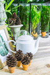 Relaxing area in cozy garden./ Relaxing area with garden object decoration on table in cozy garden.