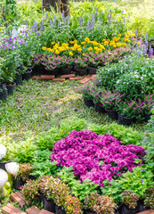 Foto op Plexiglas Tuin Beautiful flower garden on summer./ Landscaped flower garden with lots of colorful blooms on summer.