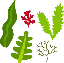 海藻のイラストセット