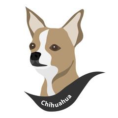 Chihuahua, the head of a dog, a dog.