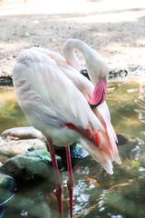 White flamingo in the zoo