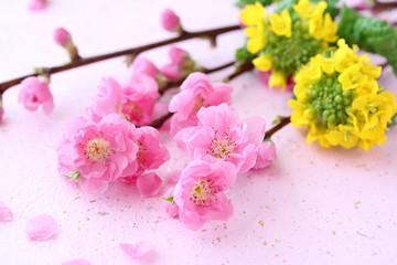 花桃 菜の花 和紙背景