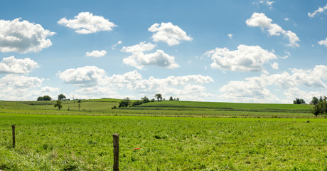 Wall Mural - Rolling Pastureland under Scattered Clouds