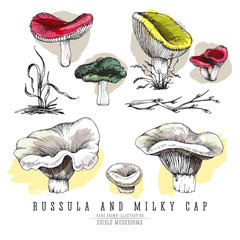 Milky cap and russula mushrooms vector color sketch illustration set. Edible mushroom, all colorful elements isolated on white background.